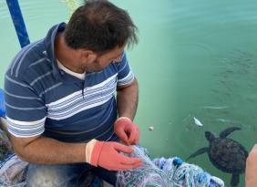 Carettalarla dost olan Erdemli'li balıkçılar, onları elleriyle besliyorlar