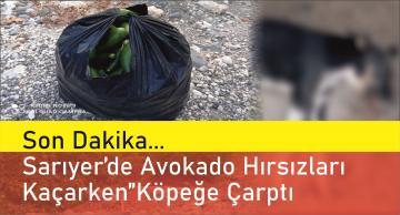 Sarıyer'de Avakado Çalan Hırsızlar Kaçarken Köpeğe Çarptı